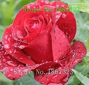 Hot!100 pcs Rose Flowers seedling seed rose plants balcony bonsai plants flower seeds rose seeds