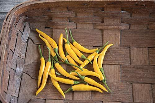 - David's Garden Seeds Pepper Chili Thai Kristian SL7833 (Yellow) 25 Non-GMO, Hybird Seeds
