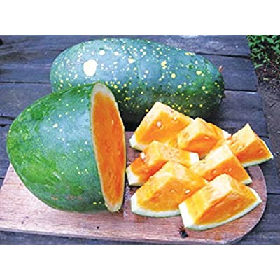 RARE Yellow Moon & Stars Giant Watermelon 10 Fresh Organic Seeds Unique : Garden & Outdoor