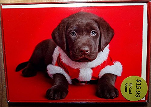 Chocolate Labrador Christmas Cards - Chocolate Labrador Puppy Dog Dressed Like