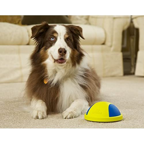 Well Wreapped K9 Cruiser Indoor Dog Toy That Glides Squeaky Toy