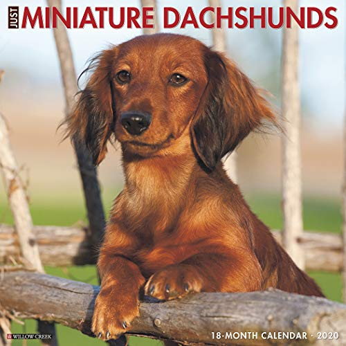 Just Mini Dachshunds 2020 Wall Calendar (Dog Breed Calendar)