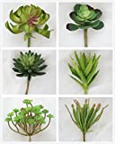 Lily Garden Set of 6 All Kinds of Green Artificial Succulent Plants (One)