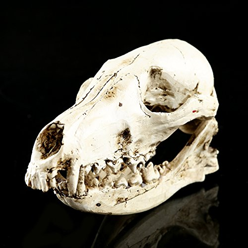 MagiDeal Resin Fox Skull Replica Head Skeleton Realistic Physiological Study Teaching Model White/Yellow - Antique White