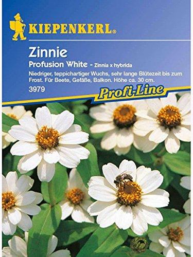 Zinnia elegans Zinnie Profusion Fire