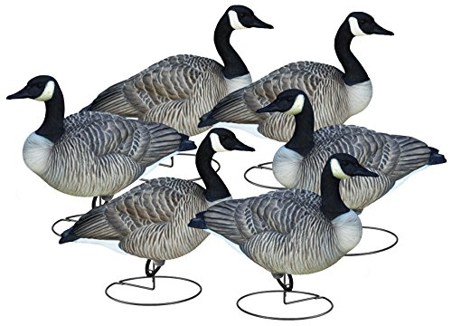 - Final Approach Livecraft Full Body Canada Goose 6 Pack Canada Goose Relaxed/Walker Full Decoys