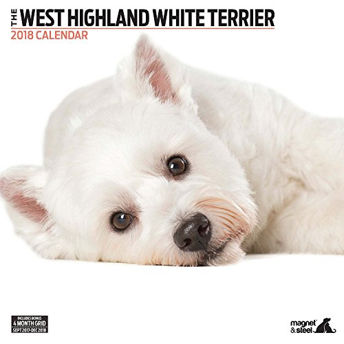 West Highland White Terrier 2018 Contemporary Wall Calendar