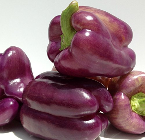 Purple Beauty Sweet Bell Peppers, 100+ Premium Heirloom Seeds, ON SALE!, (Isla's Garden Seeds), Non Gmo Organic Survival Seeds, 90% Germination, Highest Quality