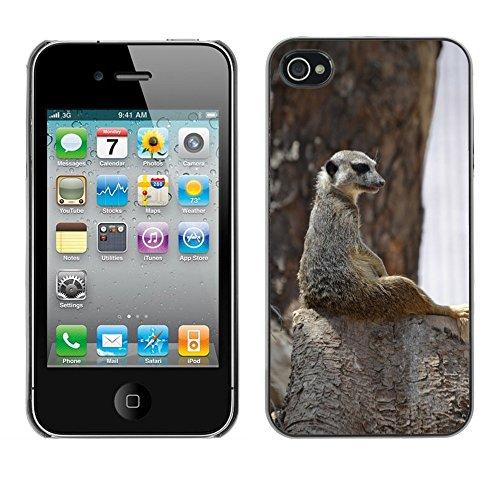 Bild Hart Handy Schwarz Schutz Case Cover Schale Etui // M00135498 Meerkat süße wilde Achtung // Apple iPhone 4 4S 4G