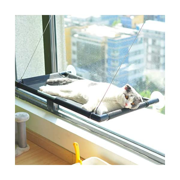 Pakeway Cat Window Perch Hammock Cat Bed with Upgraded Version 4 Suction Cups, Safest Cat Bed for Large Cat can Holds Up to 50lbs (Black) 2