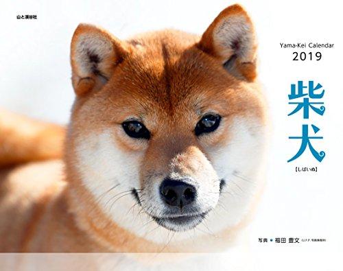 Shiba Inu Calendar 2019 Wall Calendar 14.96 x 11.81 inch Made in Japan ()