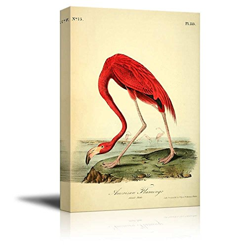 Beautiful Illustration of a American Flamingo by John James Audubon