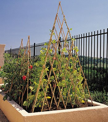Natural Bamboo Poles Teepee, 48'' H, Natural Finished BT-48 by Master Garden Products (Image #2)
