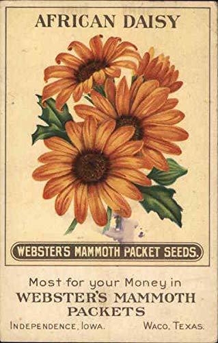 Vintage Advertising Postcard: Webster