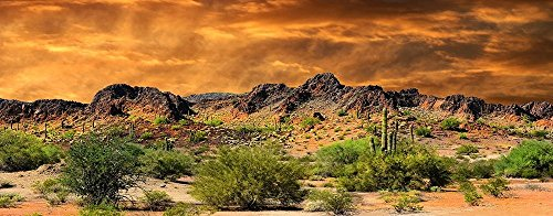 Reptile Habitat, Terrarium Background, Orange Desert Sky with Cactus - (Various Sizes) (18'' H x 48'' W) by BannersNStands