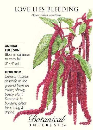 Love Lies Bleeding Seeds - 300 mg - Amaranthus by Hirts: Seed; Amaranthus
