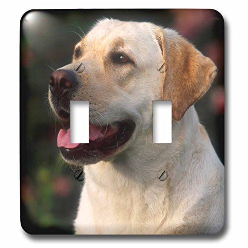 3dRose lsp_208596_2 Portrait of Labrador Retriever, Hilton, South Africa Double Toggle Switch
