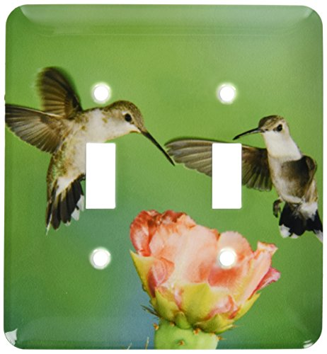 - 3dRose lsp_84201_2 Black-Chinned Hummingbird, Prickly Pear Cactus Tx Na02 Rnu0012 Rolf Nussbaumer Double Toggle Switch