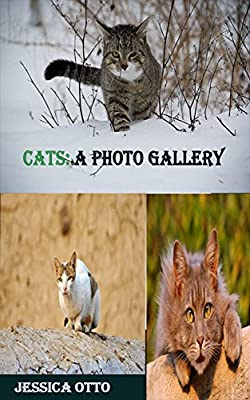 Cats: A Photo Gallery