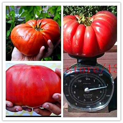 200 GIANT tomato seeds Big Beef Hybrid Tomato Seeds NO-GMO vegetable seeds for home garden planting : Garden & Outdoor