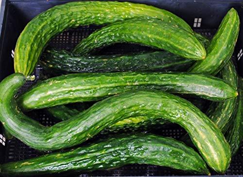 - David's Garden Seeds Cucumber Asian Suyo Long SL3333 (Green) 50 Non-GMO, Heirloom Seeds