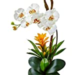 Nearly-Natural-Orchid-and-Bromeliad-Silk-Arrangement-Cream