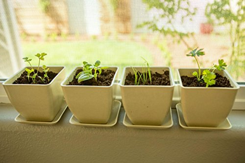Indoor Herb Garden Starter Kit - Complete with Organic, Non GMO Seeds, Soil Discs, Reusable Herb Garden Pots and Plant Markers!
