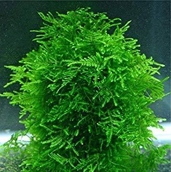 Hot Selling!!! 1bag=200pcs rare flower seeds mini aquarium grass seeds tank underwater aquatic plant seeds easy plant seeds home & garden gift