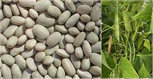 300 'White Dixie Butter Pea' Lima Bean Seeds,Heirloom pole ()
