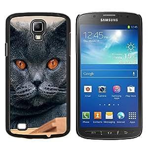 EJOOY---Cubierta de la caja de protección para la piel dura ** Samsung Galaxy S4 Active i9295 ** --Chartreux Británico de Pelo Corto Azul ruso