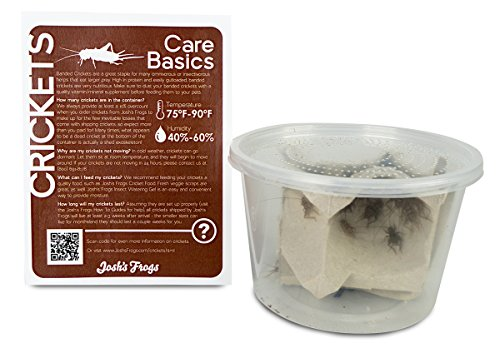 515b%2BQgg49L - Josh's Frogs 1/2 Banded Crickets (72 Count)
