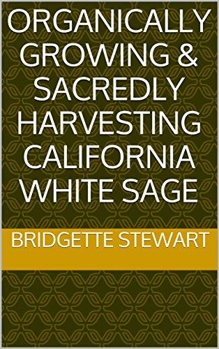 (Organically Growing & Sacredly Harvesting California White Sage)