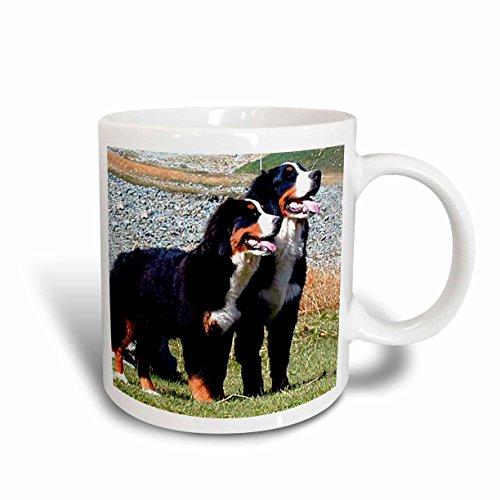 - 3dRose Bernese Mountain Dog Mug, 11-Ounce