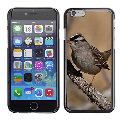 "Premio Sottile Slim Cassa Custodia Case Cover Shell // F00005429 oiseau // Apple iPhone 6 6S 6G PLUS 5.5"""