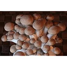 Shimeji Mushroom Growing Kit