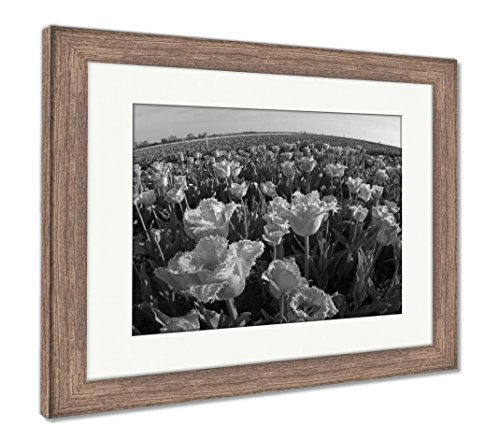 Tulips Field in Mountains, Wall Art Home Decoration, Black/White, 34x40 (Frame Size), Rustic Barn Wood Frame, AG6540331 ()