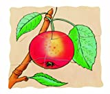 Beleduc Seed To Apple Five Layer Puzzle byHape