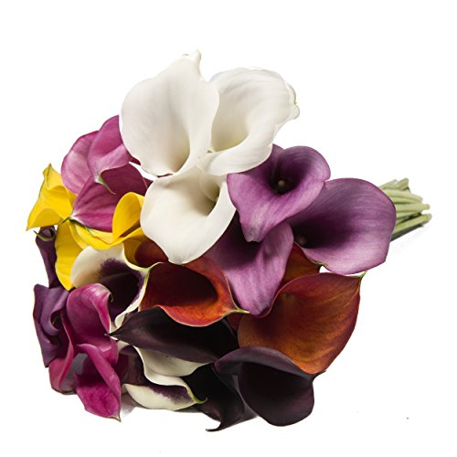 Farm Fresh Natural Assorted Mini Calla - 60 Stems by Bloomingmore