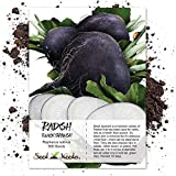 Seed Needs, Black Spanish Radish (Raphanus sativus) 500 Seeds Non-GMO