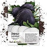 Seed Needs, Black Spanish Radish (Raphanus sativus) 500 Seeds Non-GMO
