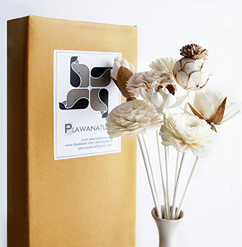 Exotic Plawanature Set of 8 Mixed Sola Wood Flower with Reed Diffuser for Home Fragrance Aroma Oil.