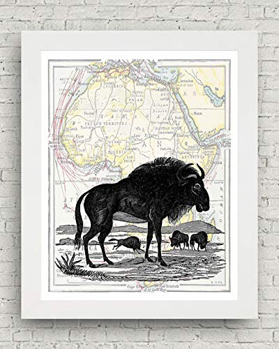 - TFH California Framed 8x10 African Animal Artwork, Fine Art Prints for The Home, Ready to Hang, Featuring Zebras, Wildebeests, Camels, and Lions (Wildebeest)