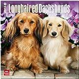 Longhaired Dachshunds Calendar, , 1465010025