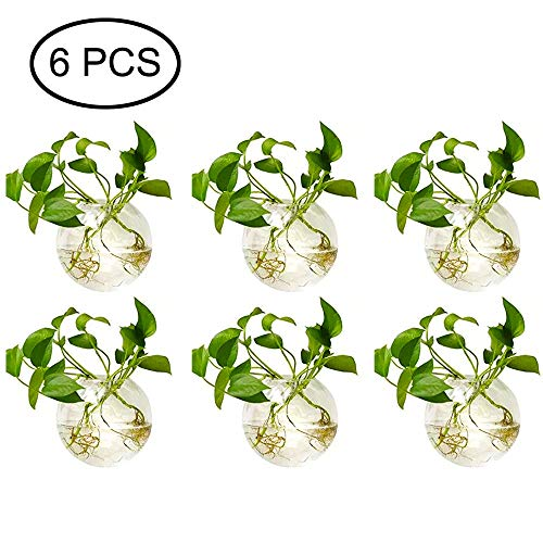 Sfeexun 6 Pcs Wall Hanging Glass Planters 4 Inches Diameter Round Glass Plant Pot – Water Planting Vases Air Flower Vase Plant Terrariums Plant Container (6 Pcs)