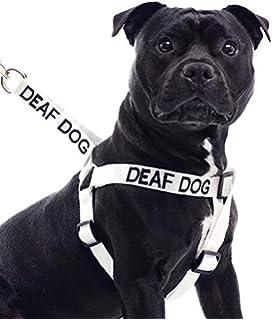 Amazon Com Petsafe Remote Trainer With Vibration Dog Collar Pet
