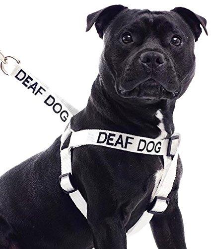 Sordos perro blanco L-XL codificados por colores no tirar perro ...