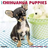 Just Chihuahua Puppies 2018 Wall Calendar (Dog Breed Calendar)