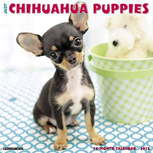 Just Chihuahua Puppies 2018 Calendar