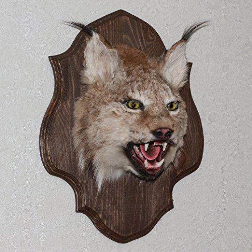 StoreTaxidermy LLC (Taxidermy Studio) EURASIAN LYNX TAXIDERMY HEAD SHOULDER MOUNT - NOT BOBCAT MOUNTED, STUFFED ANIMALS FOR SALE - REAL, DECOR, WALL MOUNT - ST4361