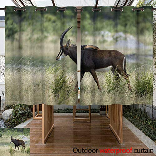 (WinfreyDecor Outdoor Balcony Privacy Curtain Pregnant Female Sable Antelope Walking Right in Hwange National Park Zimbabwe W55 x L72)